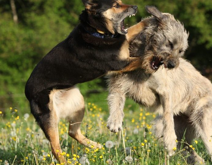 Tulsa Injury Lawyers Discuss Oklahoma Dog Bite Liability