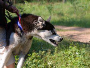 Oklahoma Dog Bite Liability - Tulsa Personal Injury Attorneys -